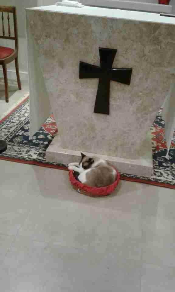 cat stays in a church