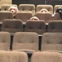 A crew of service dogs watched a live musical as part of their training