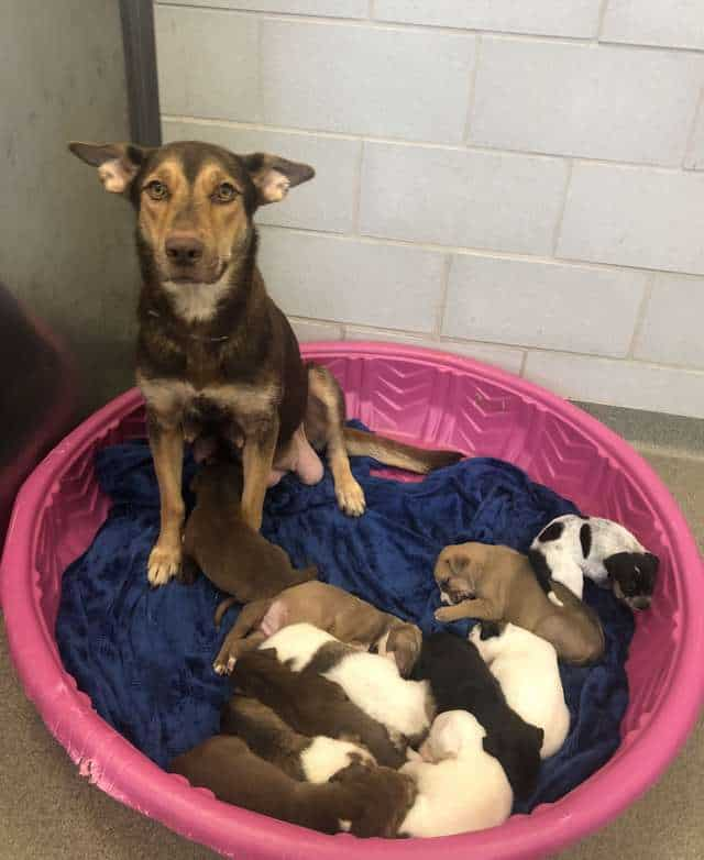 shelter puppy