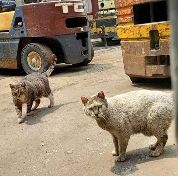 The money people donate to ASPCA help stray animals.