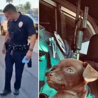 Tiny dog follows his rescuer around and becomes newest 'member' of LAPD's K-9 unit
