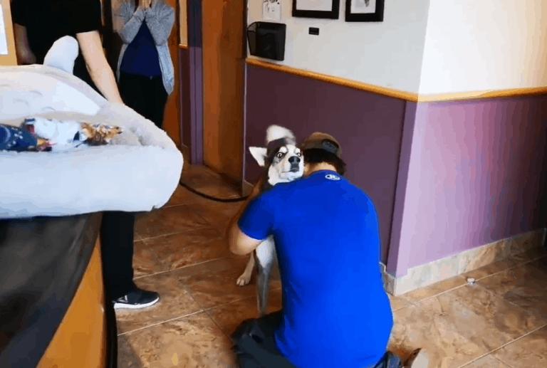 losing a pet dog