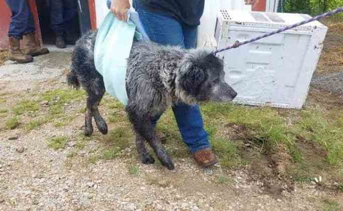 Dog rescued by animal control from Dallas.