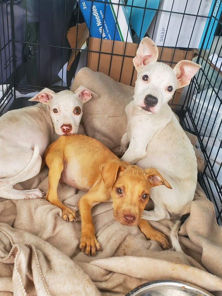 Dogs at Taft Animal Shelter rescued by an animal control supervisor.