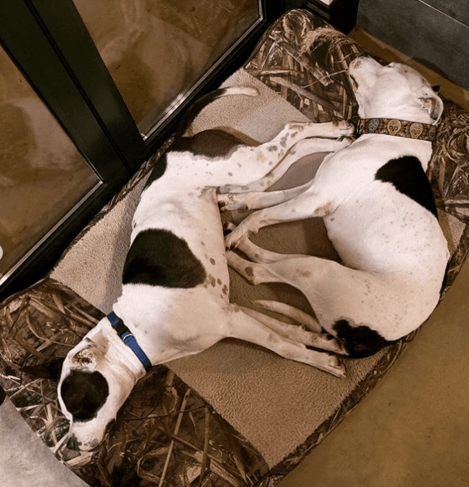 WWE star bonded with these two pit bulls.