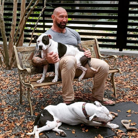 WWE star hanging out with his rescued pups.