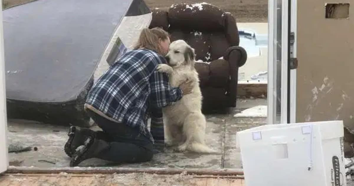 Dog shares sweetest reunion with mom after tornado destroys their home - my positive outlooks