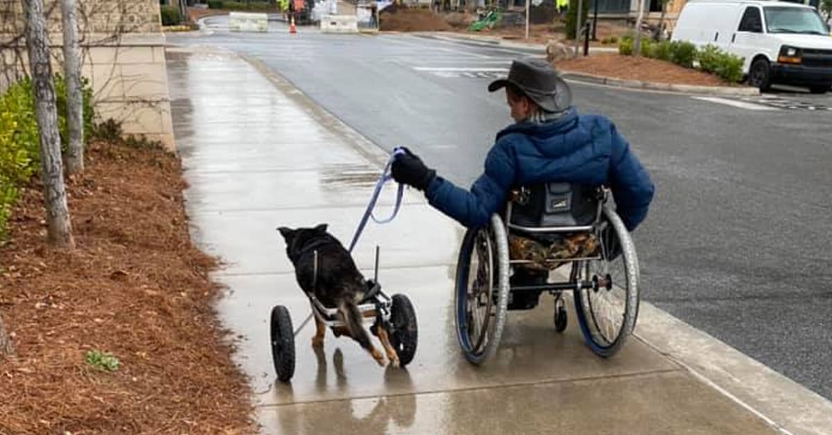 Paralyzed dog returned 4 times is finally adopted by a family who understands him - my positive outlooks