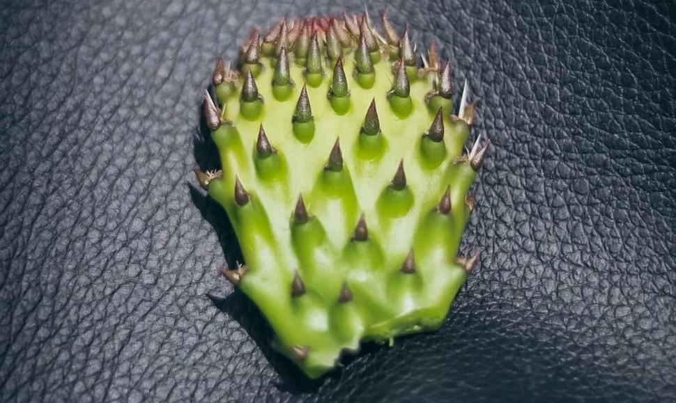 Leather made out of cactus to save the nature.