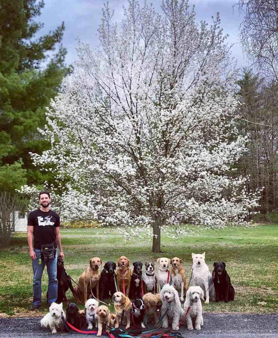 Passeador de cães tira todos os dias retratos adoráveis do estilo peludo de classe 14