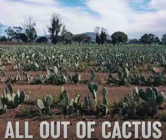 Entrepreneurs create eco-friendly vegan leather using cactus to save the nature.