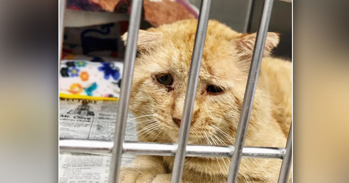 Rescue cat with the 'saddest eyes' can't stop purring when woman finally brings him home - my positive outlooks