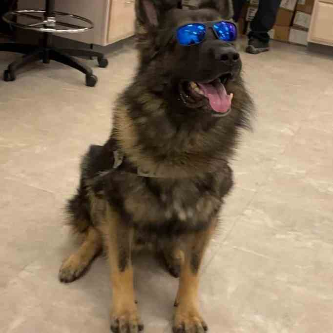 K-9 police officer Chico during National Dog Day