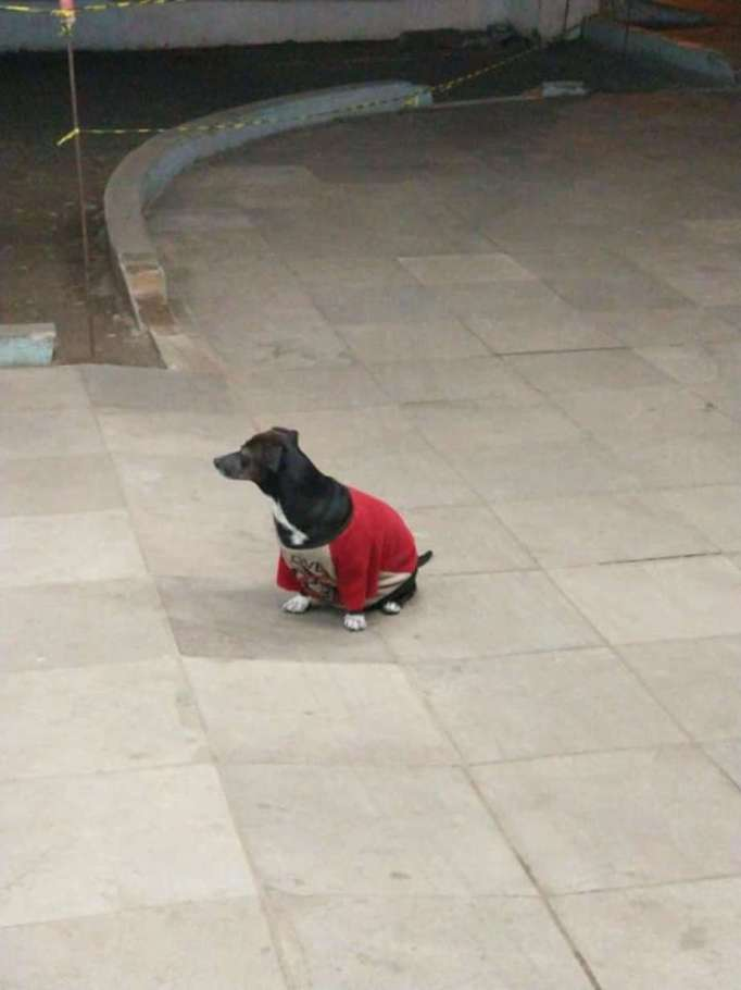 Dog in Brazil waiting for his owner outside a hospital