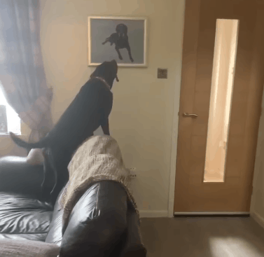 Dog's reaction to seeing a painting of his brother who passed away will touch you