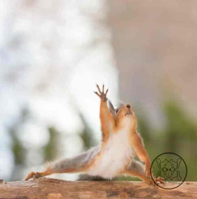 A squirrel stretching