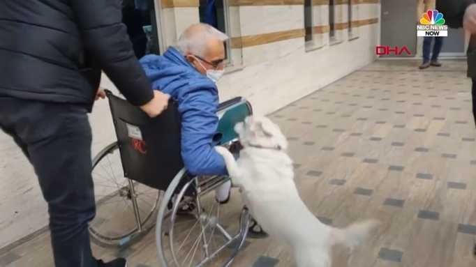 A white dog jumping up to her owner who is in a wheelchair