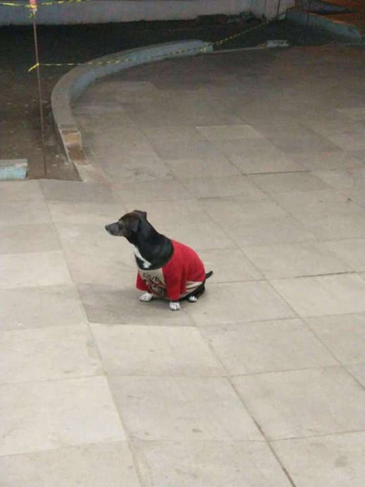 A dog waiting outside a hospital for her owner