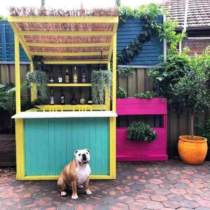 A bulldog sitting in front of a backyard bar