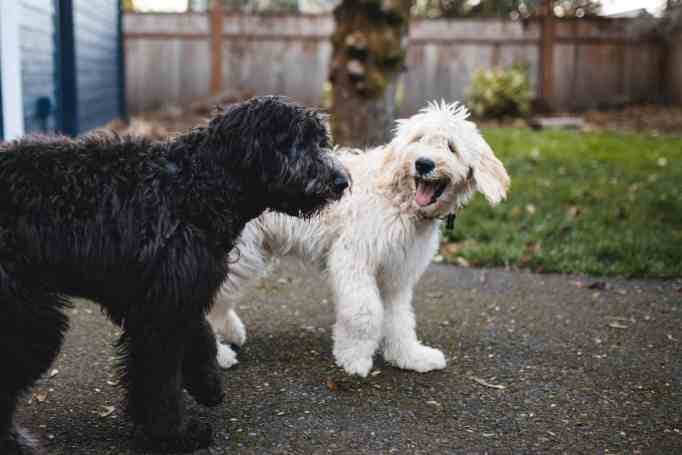 Two dogs, happily playing together