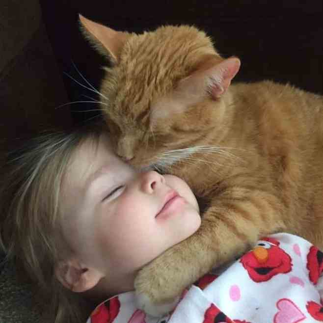An orange tabby cat kissing a little girl's face