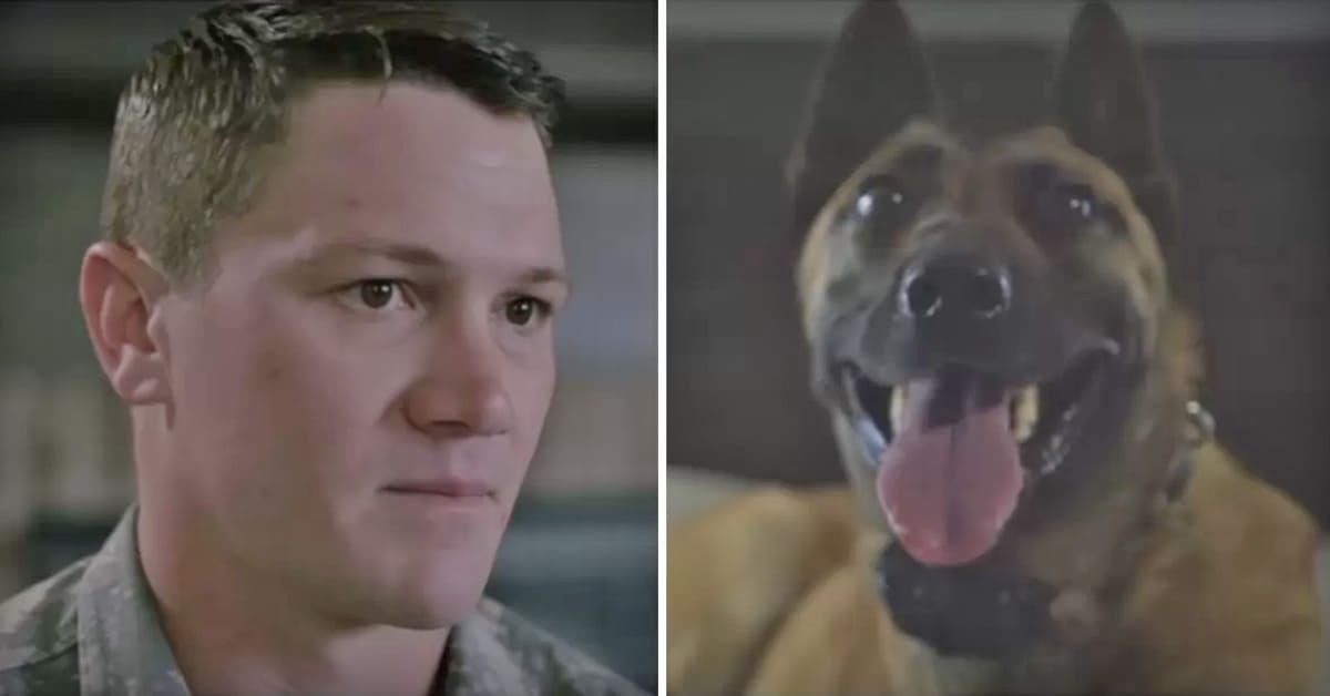 Soldier adopts dog who saved his life despite warnings about her being 'scary' - my positive outlooks