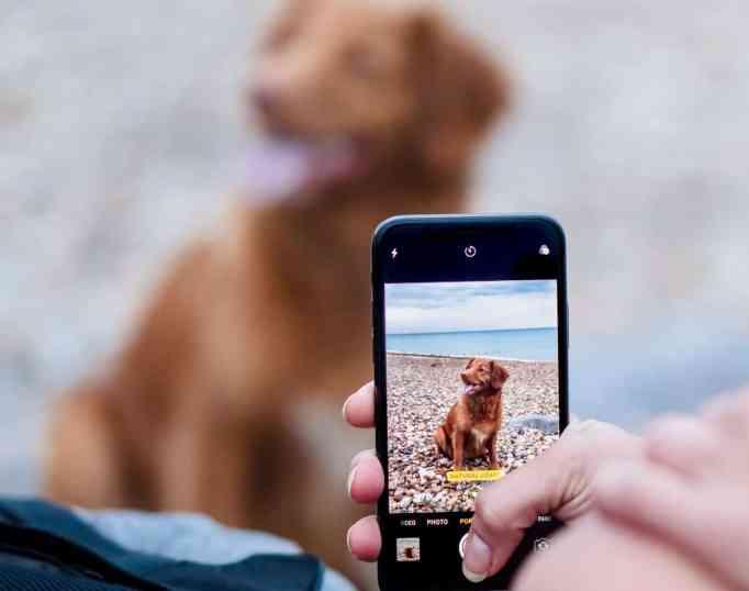 Dog parent taking selfie photos.
