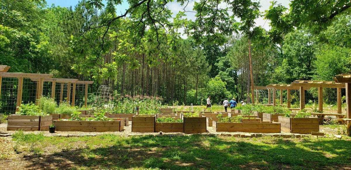 Food forest in Atlanta