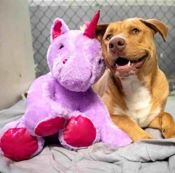 Sisu with his stuffed purple unicorn