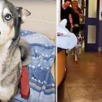 Missing dog couldn't help but 'scream' with joy upon seeing his dad again after 3 years apart