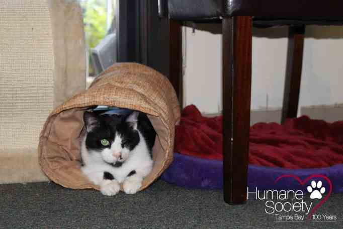 Bart the cat playing peek-a-boo inside his tube