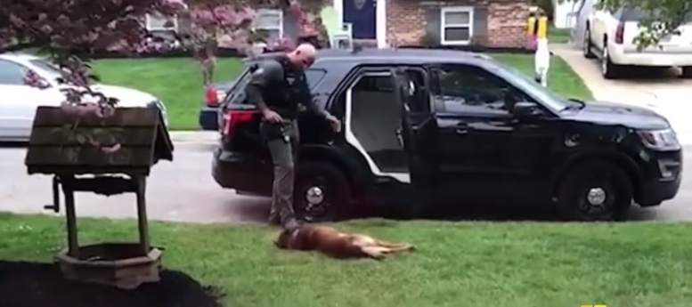 Officer Costin convincing Jango to get into the car