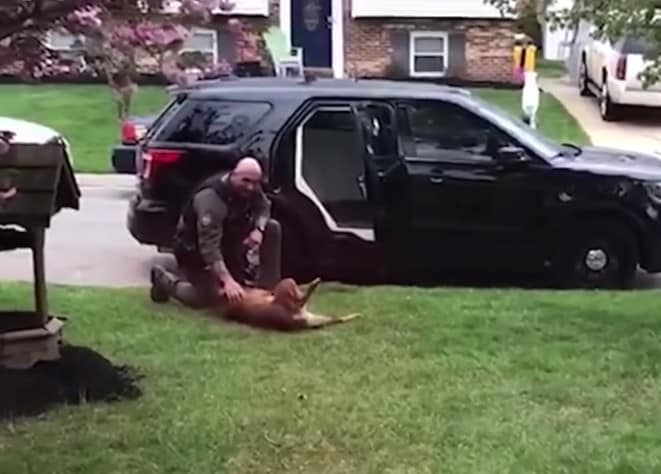 Officer Costin giving Jango belly rubs