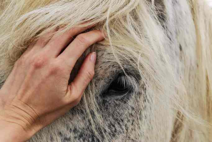 A hand on a white horse's face