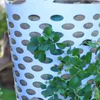 People are using laundry baskets to grow their own strawberries, and it's the best gardening idea ever