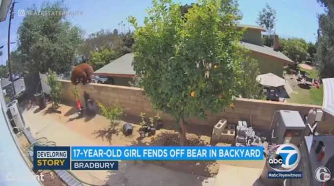 Медведь нападает на черную собаку