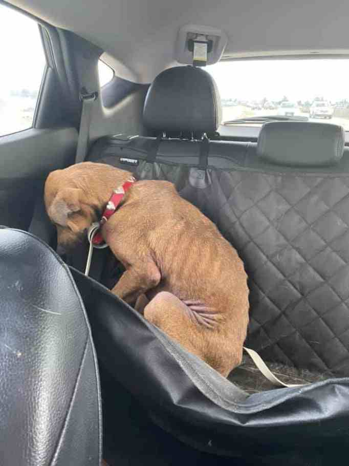 A sad dog in the backseat of a vehicle
