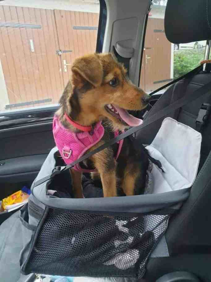 Coco in her car seat