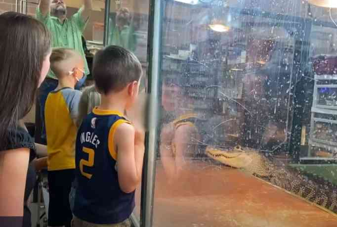 Guests watching the alligator behind a well secured partition glass.