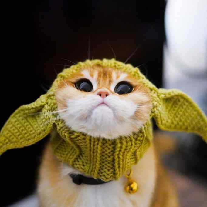 Pisco wearing a Baby Yoda crocheted costume