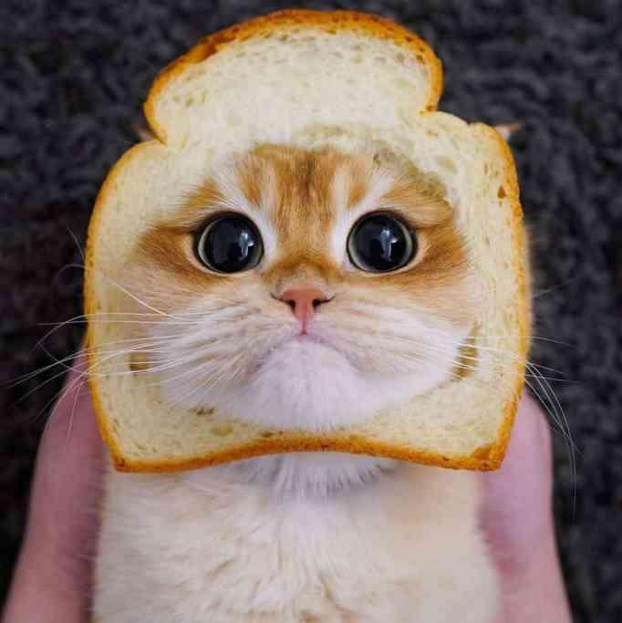 Pisco wearing a bread costume