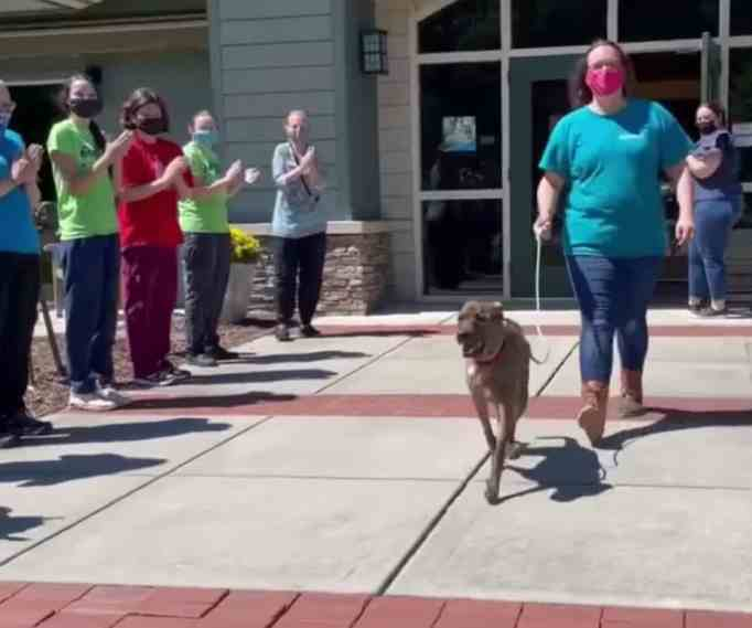 The McKamey Animal Center staff giving Big Mac and his mom a standing ovation as they walk out of the building