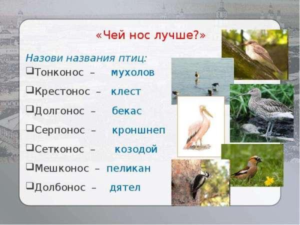 Творчество В.В. Бианки - презентация, доклад, проект скачать