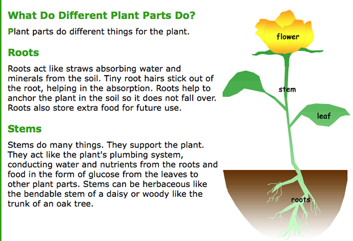 Science : The Biology of Plants