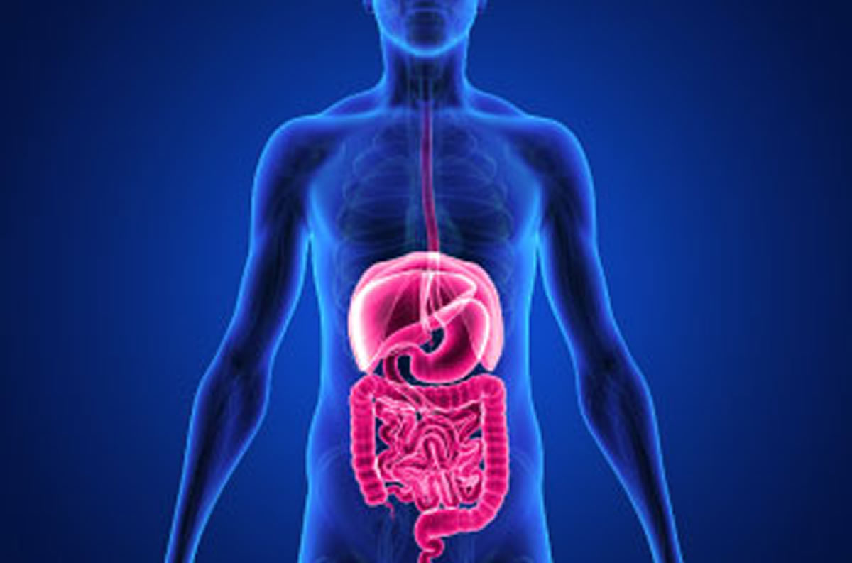Human Body : The Digestive System