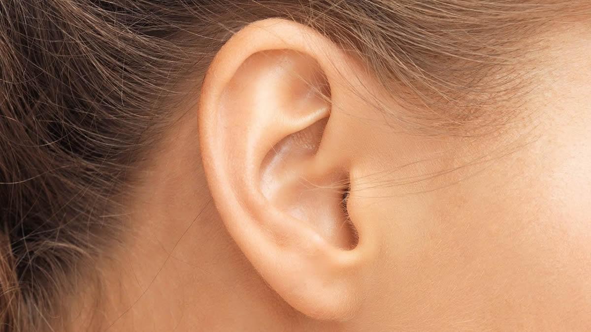 Human Body : Ears