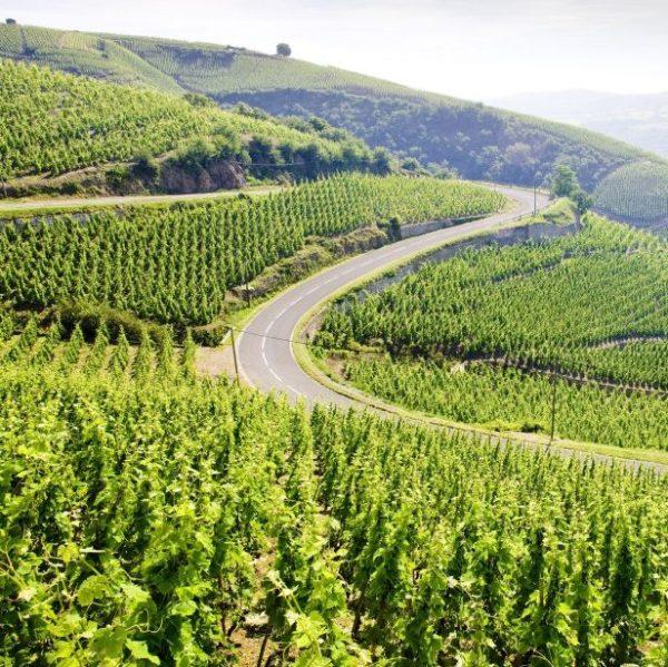 visite domaine viticole