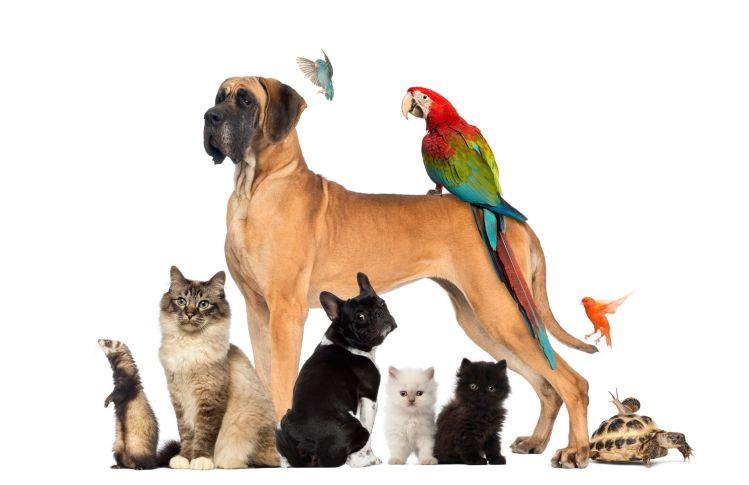 Feng Shui Your Pets?