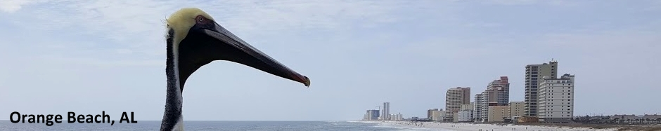 Gulf Shores Pelican