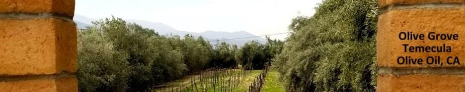 Temecula Olive OilTreesl